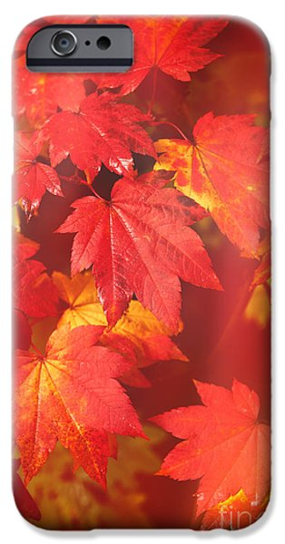 Turning Leaves iPhone Cases - Westonbirt Arboretum Abstract iPhone Case by Amanda And Christopher Elwell