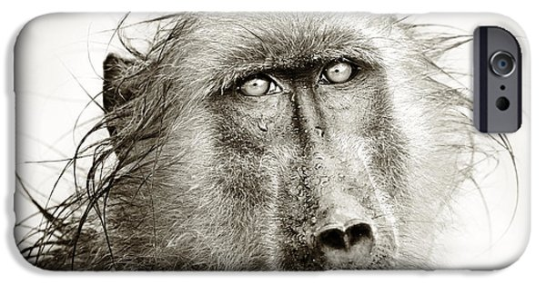 Raining iPhone Cases - Wet Baboon portrait iPhone Case by Johan Swanepoel