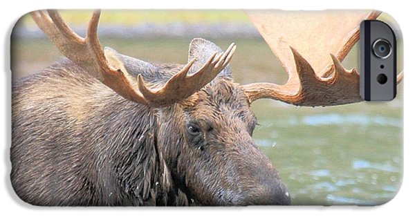 Moose In Water iPhone Cases - Wet Beard iPhone Case by Adam Jewell
