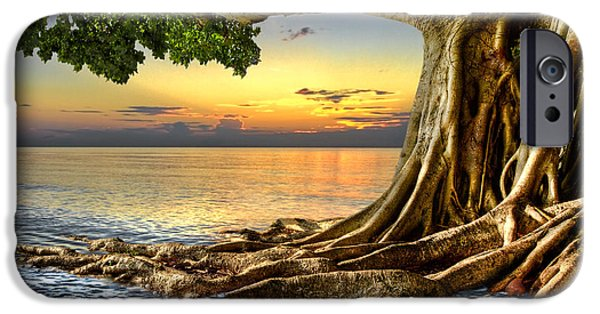 Tree Roots Photographs iPhone Cases - Wet Dreams iPhone Case by Debra and Dave Vanderlaan