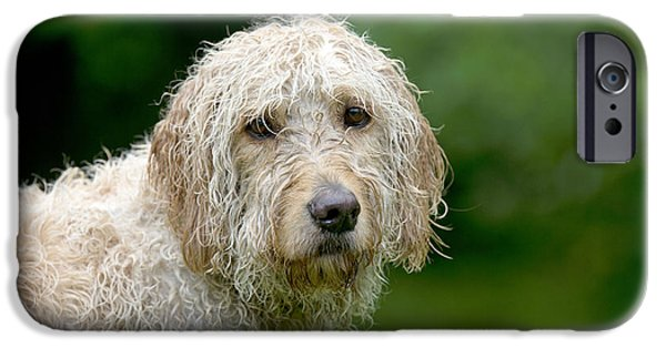 Dog Close-up iPhone Cases - Wet Goldendoodle iPhone Case by John Daniels
