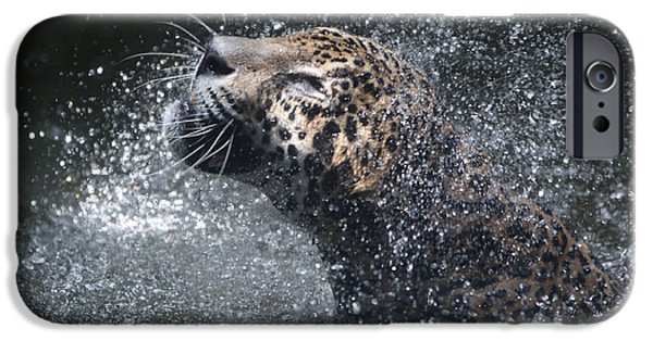 Posters Pyrography iPhone Cases - Wet Jaguar  iPhone Case by Shoal Hollingsworth