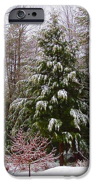 Winter Scene iPhone Cases - Wet Snowy Hemlock iPhone Case by MTBobbins Photography