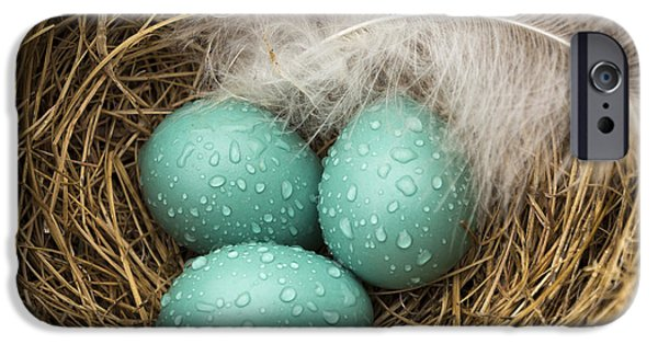 Jean Noren iPhone Cases - Wet Trio of Robins Eggs iPhone Case by Jean Noren