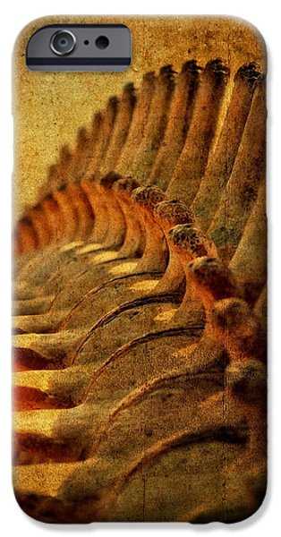 Disc iPhone Cases - Whale Bone iPhone Case by See My  Photos
