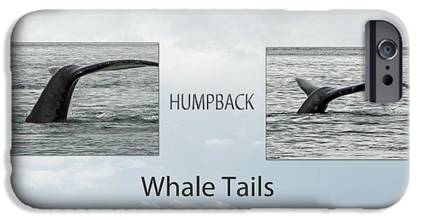Haybale iPhone Cases - Whale Tails iPhone Case by Robert Bales
