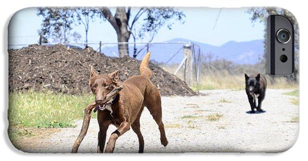 Dog Trots Photographs iPhone Cases - What am I doing with this? iPhone Case by Christopher Edmunds