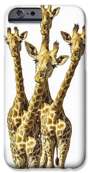 Giraffes iPhone Cases - What are YOU looking at? iPhone Case by Diane Diederich