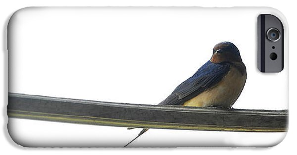 Barn Swallow iPhone Cases - What is Now iPhone Case by Thomas Shanahan