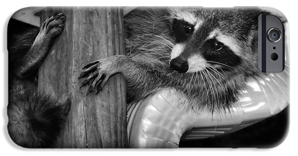 Fury iPhone Cases - What is that dog barking again  oh what a raccoon has to put up with iPhone Case by Constance Lowery