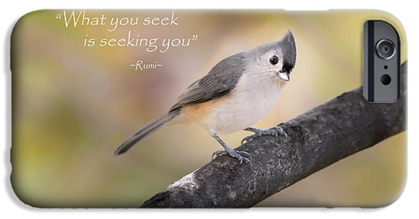 Titmouse iPhone Cases - What You Seek iPhone Case by Bill  Wakeley