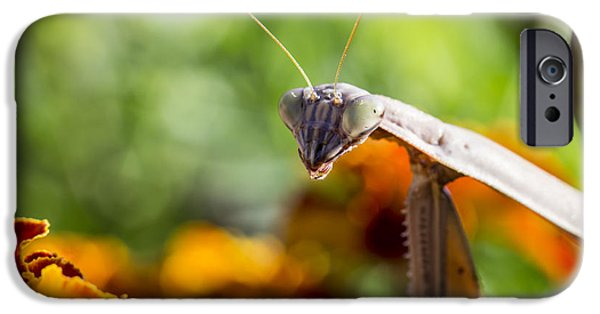 Mantodea iPhone Cases - Whataya Lookin At iPhone Case by Andrew Pacheco
