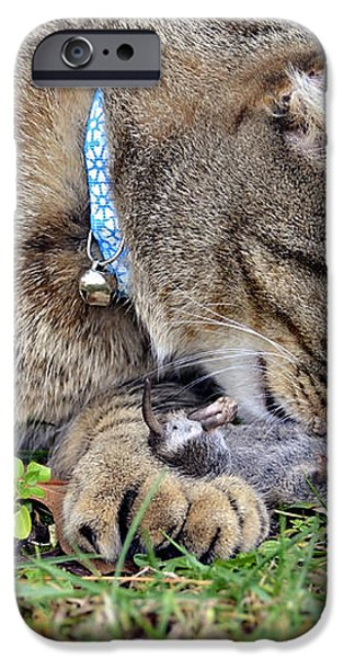What's For Dinner iPhone Case by Susan Leggett