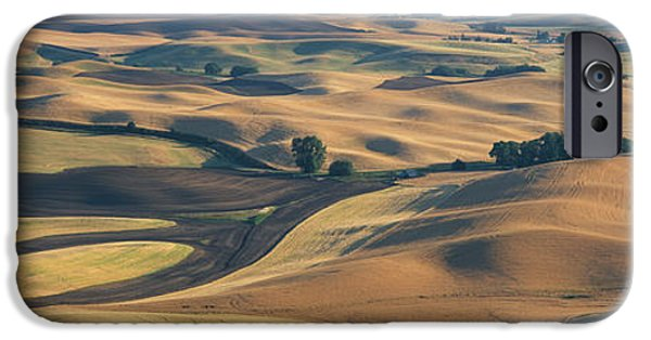 Agricultural iPhone Cases - Wheat And Barley, S.e. Washington iPhone Case by Panoramic Images