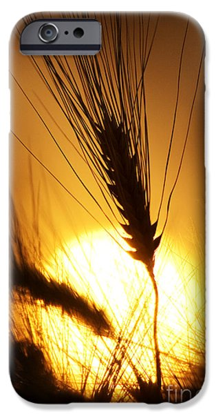 Fiery iPhone Cases - Wheat at Sunset Silhouette iPhone Case by Tim Gainey