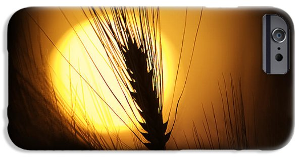 Fiery iPhone Cases - Wheat at Sunset  iPhone Case by Tim Gainey