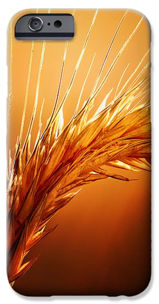 Macro iPhone Cases - Wheat Close-up iPhone Case by Johan Swanepoel