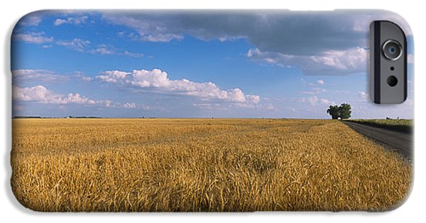 Horizon Over Land iPhone Cases - Wheat Crop In A Field, North Dakota, Usa iPhone Case by Panoramic Images