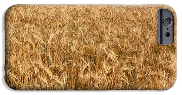 Agriculture iPhone Cases - Wheat Crop In A Field, Otter Tail iPhone Case by Panoramic Images