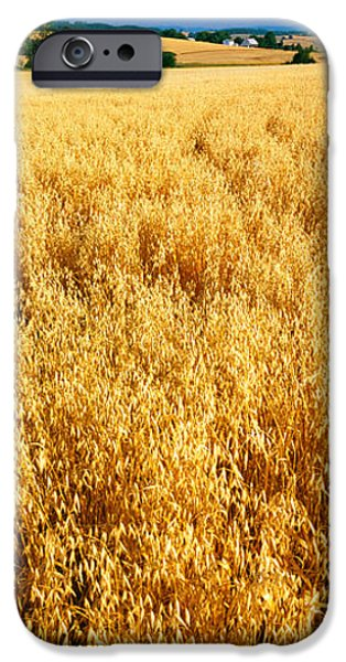 Crops iPhone Cases - Wheat Crop In A Field, Willamette iPhone Case by Panoramic Images