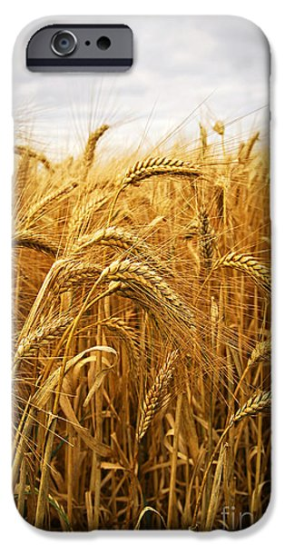 Agricultural iPhone Cases - Wheat iPhone Case by Elena Elisseeva