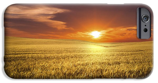 Agricultural iPhone Cases - Wheat Field iPhone Case by Aged Pixel