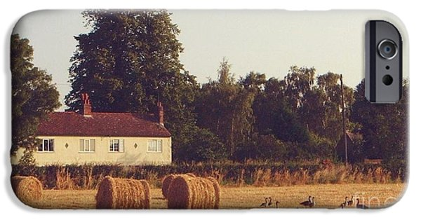 Lincoln iPhone Cases - Wheat field and Geese at Harvest iPhone Case by John Clark