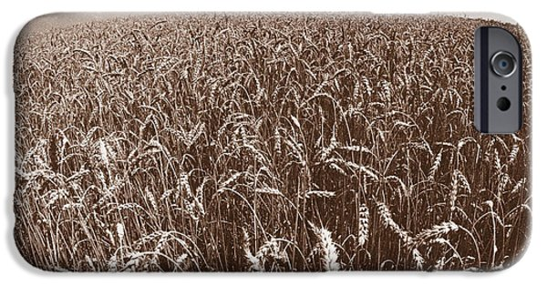 Field. Cloud iPhone Cases - Wheat Fields Forever iPhone Case by Steven Huszar