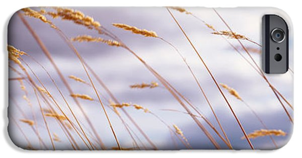 Crops iPhone Cases - Wheat Stalks Blowing, Crops, Field iPhone Case by Panoramic Images