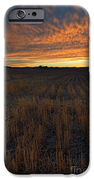 Crops iPhone Cases - Wheat Stubble Sunset iPhone Case by Mike  Dawson