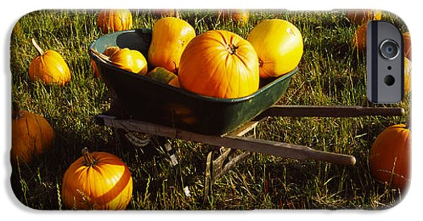 Half Moon Bay iPhone Cases - Wheelbarrow In Pumpkin Patch, Half Moon iPhone Case by Panoramic Images
