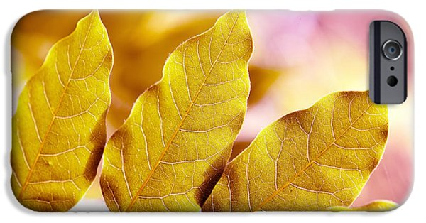 San Francisco Famous Photographers iPhone Cases - When the Leaves Turn Gold iPhone Case by Artist and Photographer Laura Wrede