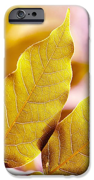 When the Leaves Turn Gold iPhone Case by Artist and Photographer Laura Wrede