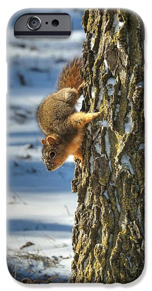 Nebraska iPhone Cases - Where are My Nuts 3 iPhone Case by Dimitry Papkov