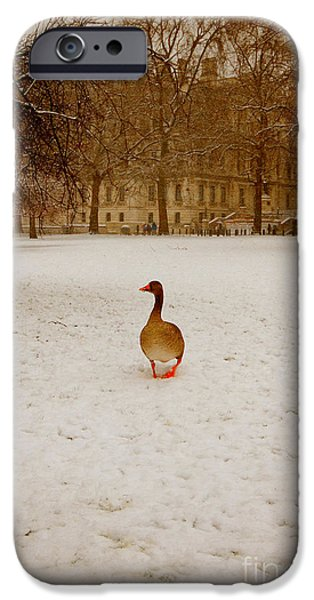 Geese iPhone Cases - Where is everyone iPhone Case by Jasna Buncic