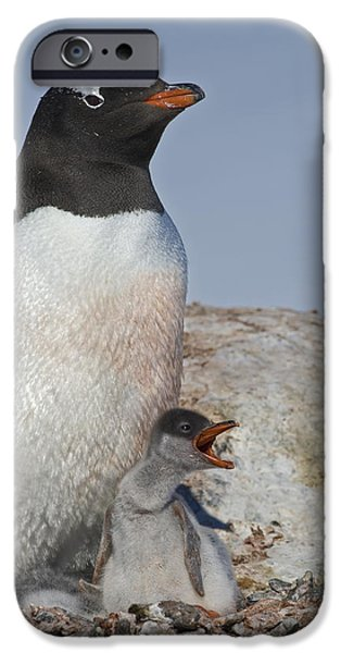Where is my Krill... iPhone Case by Nina Stavlund