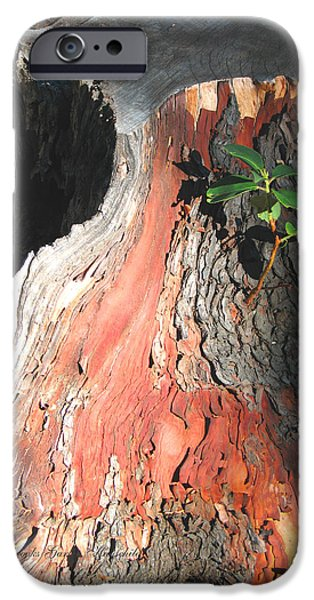 Tree Art Print iPhone Cases - Where Theres a Will... iPhone Case by Brooks Garten Hauschild