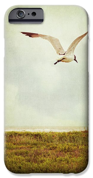 Flying Seagull iPhone Cases - Where to Go? iPhone Case by Trish Mistric