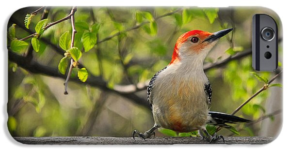 Woodpecker iPhone Cases - Which Way Did They Go iPhone Case by Lois Bryan