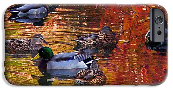 Ducks iPhone Cases - Which Way iPhone Case by Rona Black