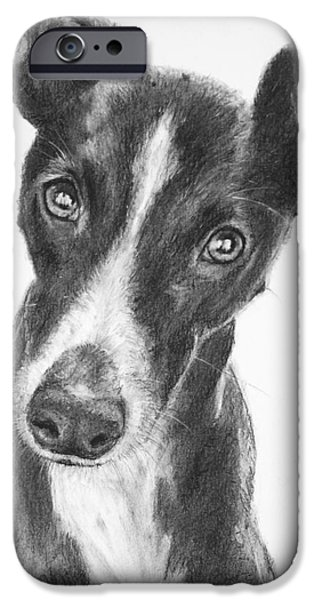 Rescued Greyhound iPhone Cases - Whippet Black and White iPhone Case by Kate Sumners