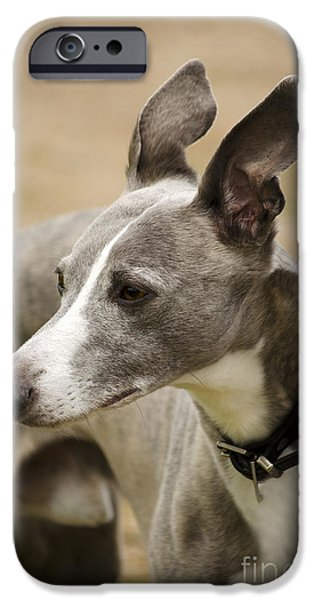 Dog Close-up iPhone Cases - Whippet iPhone Case by Linsey Williams