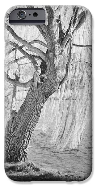 Willow Lake iPhone Cases - Whiskey Lullabies iPhone Case by Andrea Goodrich
