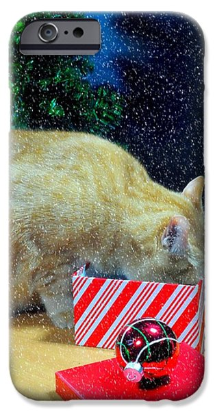 Orange Tabby iPhone Cases - Whiskeys Present iPhone Case by Diana Angstadt