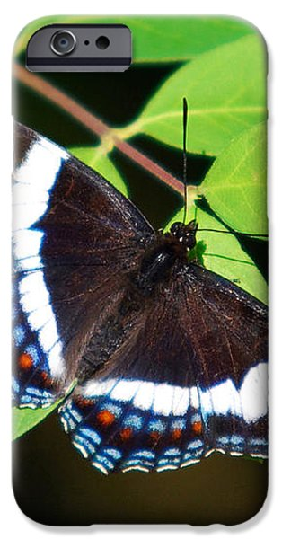 White Admiral Butterfly iPhone Case by Christina Rollo