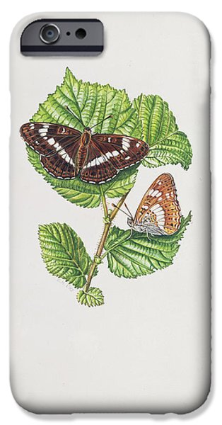 Botanical iPhone Cases - White Admiral Butterfly On Hazel Leaves Wc iPhone Case by Elizabeth Rice