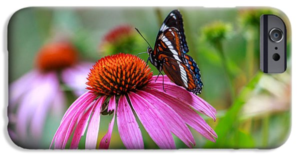 Insect Pyrography iPhone Cases - White Admiral on a Flower iPhone Case by Rebecca Brooks