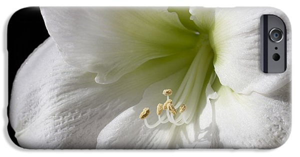 Nature Study iPhone Cases - White Amaryllis iPhone Case by Adam Romanowicz