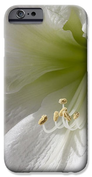 White Amaryllis iPhone Case by Adam Romanowicz