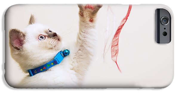 Young iPhone Cases - White and Brown British Shorthair Kitten Playing With Ribbons iPhone Case by Leyla Ismet